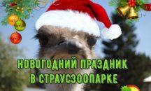 """Дорогие друзья! 💕 Спешите провести незабываемые, супервеселые Новогодние каникулы в Экопарке «Страусозоопарк"""" 🎅🌀❄🎄 📣Дата: 6 января 2020г."""