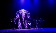 6 февраля - Челябинский Молодёжный театр. «Как слониха упала с неба»!