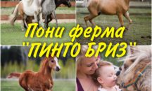 """05.11 - Пони ферма """"Пинто Бриз"""""""